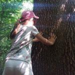 alberi ico